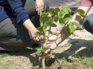 البوليتكنك توعي طلبتها بأهمية تطوير قطاع الزراعة في المملكة استجابة لمبادرة الـ NIAD