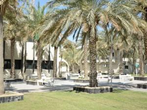 "Polytechnic Replaces ""Conocarpus"" Trees With Fruit Trees"
